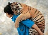 בעלי חיים ואנשים