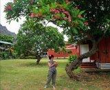 האי הגדול הוואי מצגת מס  6