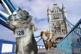 הקביות באולימפיאדת לונדון 2012