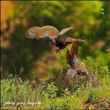 ציפורים בסין