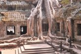 נגיעות מקמבודיה