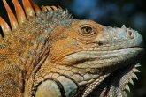 Fauna of Costa Rica