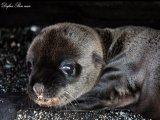 תמונות יפות של חיות מאת דפנה בן נון