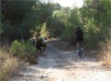 מסלול אופניים ברמות מנשה