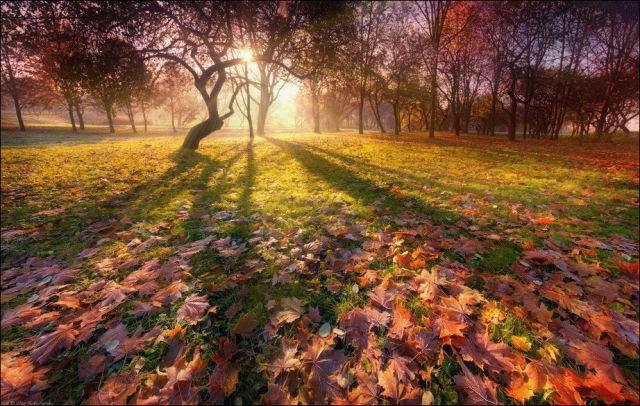 כשהסתיו מגיע, הטבע נראה במיטבו