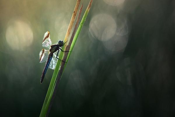 מאקרו בטבע - צילום מרהיב