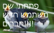 ציפורים וחיות אחרות