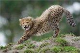 תמונות מדהימות של חיות בר