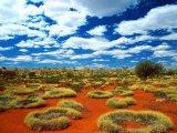 חיים במדבר