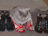Cats in shoes