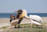 צילומי ציפורים מדהים בצבעים בצילום מעולה