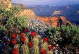 תמונות היפות ביותר של הטבע