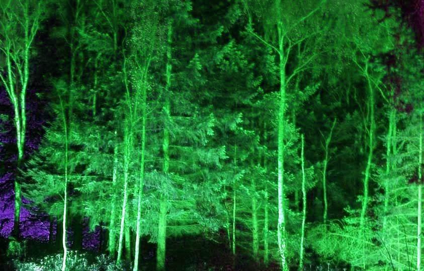 יערות מכושפים .............