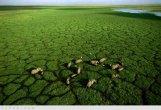 תמונות מרהיבות מרחבי אפריקה