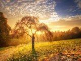 תמונות טבע נדירות