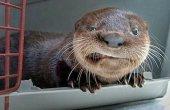 קטעי חיות מצחיקות