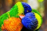 ציפורים ציבעוניות מדהימות