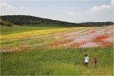 נופים בישראל  -  Landscapes in Israel