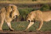 יום האישה הבינלאומי במשפחת אריות
