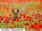 תמונות יפות של חיות בטבע