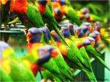 ציפורים בצבעים