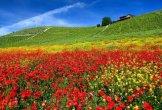 צבעי הקיץ