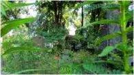 פולין לודז בלוטי בית הקברות היהודי Poland Lodz  Jewish Cemetery 2013