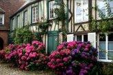 פריחת ורדים בכפר ג`רברוא (Gerberoy), צרפת