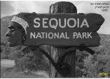 הכרזת פארק הסקוייה כשמורה לאומית