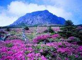 נופים של דרום קוריאה