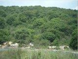 יער ריחן שבצפון השומרון