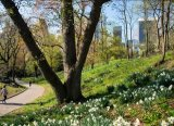ניו יורק - אביב בסנטרל פארק