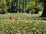 אגם קאדו בטקסס