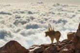 צילומי חיות הבר המדהימים של 2014