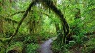 יער הגשם במדינת וושינגטון ארצות הברית