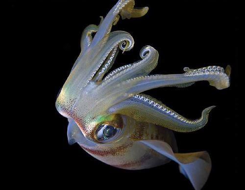 תמונות מהים ומשוניות אלמוגים
