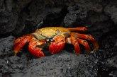 חיות הבר של איי גלאפגוס