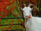 בעלי חיים בעונת הסתיו
