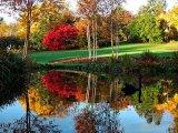 גן עוצר נשימה בניו זילנד