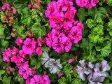 ביקור בקורדובה - עיר הפרחים