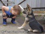 תמונות חמודות של כלבים וילדים