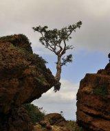 עצים נובטים במקומות לא רגילים