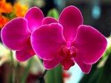 נופים פרחים ופריחות