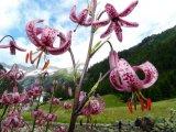 פרחי הבר ובעלי חיים בהרי צפון איטליה
