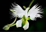 פרחים, כמו יצורים חיים