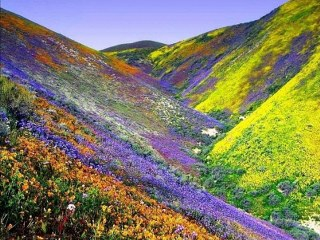 Valley of Flowers National Park,  Himalaya, India