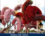 פסטבל הפרחים בפסדינה
