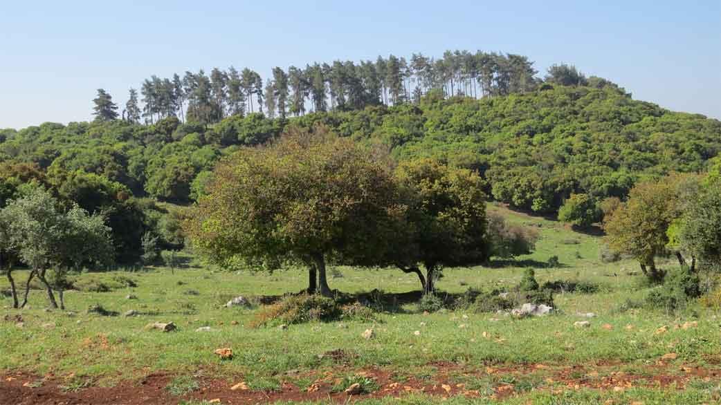 הר הכרמל - חלק ב