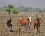 מצגת פנטסטית אתיופיה