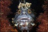 בעלי חיים ימיים